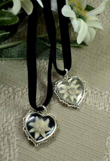 Mini Heart Pendant Real Edelweiss Black Velvet Band